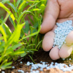 Government releases part of long-awaited subsidy on Fertilizers